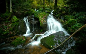 Picture forest, stones, waterfall