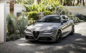Picture auto, light, Alfa Romeo, Giulia Quadrifoglio