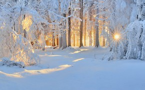 Picture winter, forest, snow, morning