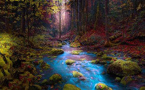 Picture autumn, forest, trees, landscape, mountains, nature, river, stream, stones, moss, Bosnia, Mevludin Sejmenovic