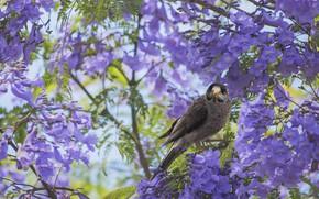 Picture flowers, tree, bird