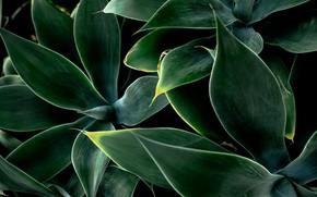 Picture leaves, plant, plants, petals