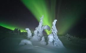 Picture winter, snow, trees, landscape, night, nature, Northern lights, ate, Murmansk oblast, Rev Alex, Alex Revs, …
