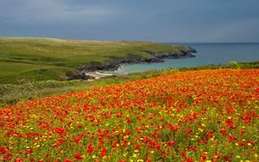 Picture sea, field, the sky, flowers, rocks, coast, England, Maki, chamomile, horizon, plateau, Crantock