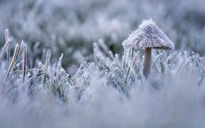 Picture frost, autumn, grass, mushroom, ice, frost, frost
