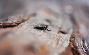 Picture macro, fly, background, tree