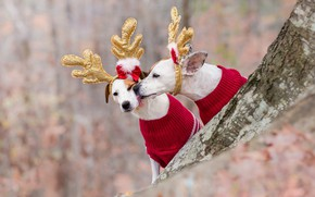 Picture language, dogs, red, nature, style, background, tree, mood, pen, holiday, clothing, two, Christmas, pair, costume, …