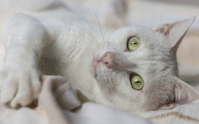 Picture cat, cat, look, green eyes