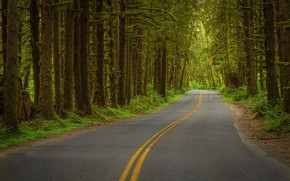 Picture road, forest, nature, track