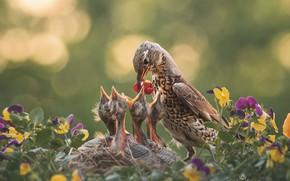 Picture flowers, nature, bird, socket, Chicks, bokeh, feeding