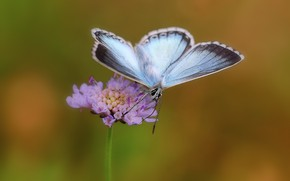Picture flower, butterfly, butterfly