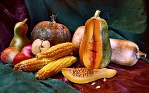 Wallpaper apples, corn, pumpkin, fabric, fruit, vegetables