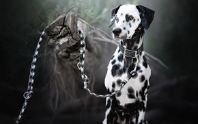 Picture each, dog, leash