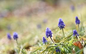 Picture macro, flowers, spring, purple flowers