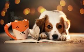 Picture look, face, glare, dog, mug, book