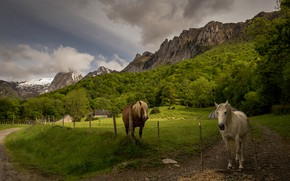 Picture road, greens, field, forest, grass, clouds, mountains, rocks, the slopes, tops, horses, horse, pasture, meadow, …
