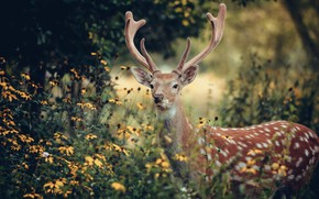 Picture flowers, nature, deer