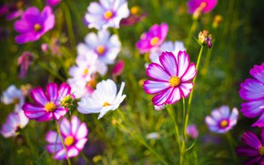 Picture flowers, background, petals