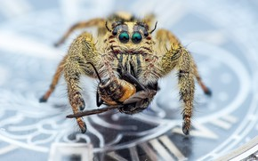 Picture macro, background, spider, insect, coin