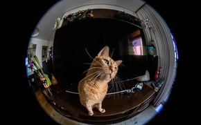 Picture cat, cat, look, reflection, room, round, camera, red, lens, effect, monitor, black background, screen, fisheye, ...