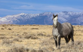 Picture field, the sky, look, mountains, nature, horse, horse