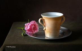 Picture flower, water, rose, mug