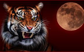 Wallpaper night, tiger, the moon