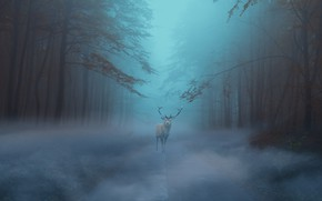 Picture morning, fog, road, deer, twilight, autumn, forest