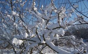 Picture winter, snow, trees, Meduzanol ©