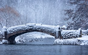 Picture winter, frost, forest, snow, trees, birds, branches, bridge, pond, Park, river, shore, duck, pack, frost, …