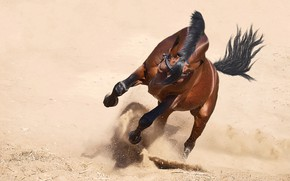 Picture sand, face, nature, pose, background, movement, horse, desert, horse, stallion, dust, power, mane, tail, brown, ...