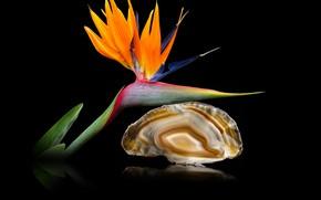 Picture flower, exotic, quartz, agate