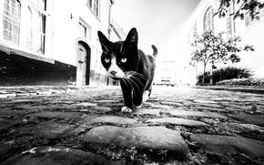 Picture cat, home, bridge, cat, houses, pavement, Marc Huybrighs