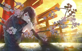 Picture Sunset, Flowers, The sun, Girl, The evening, Sakura