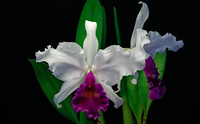 Picture macro, exotic, Orchid