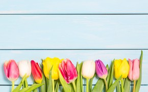 Picture flowers, flowers, spring, tulips, tulips, wood, colorful