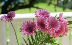 Picture flowers, bouquet, garden, pink, gerbera, flowerbed, bokeh