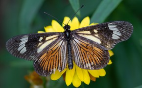 Picture flower, macro, yellow, butterfly