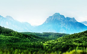 Picture forest, mountains, horizon