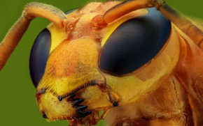 Picture eyes, macro, background, OSA, portrait, insect, antennae