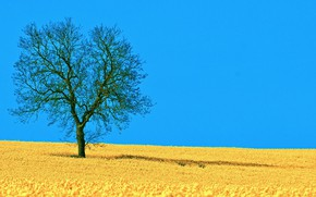 Picture the sky, photo, tree, glade