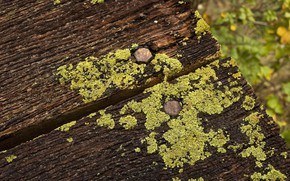 Picture Board, moss, rotten