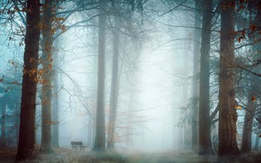 Picture nature, fog, Park, bench