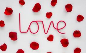 Picture love, roses, petals, red, love, rose, romantic, petals