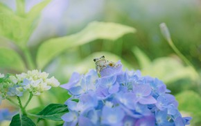 Picture greens, summer, leaves, macro, flowers, frog, garden, blue, bokeh, hydrangea