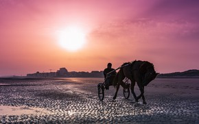 Picture night, the city, horse, shore