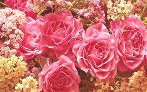 Picture flowers, roses, bouquet, pink