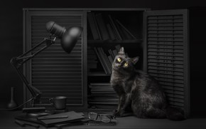 Picture cat, eyes, cat, look, light, background, black, lamp, glasses, light, library, black, eyes, cat, background, …
