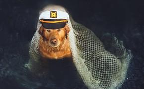 Picture each, dog, sailor