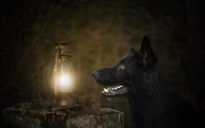 Picture background, lamp, dog